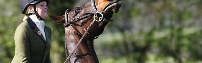 HorseChannel